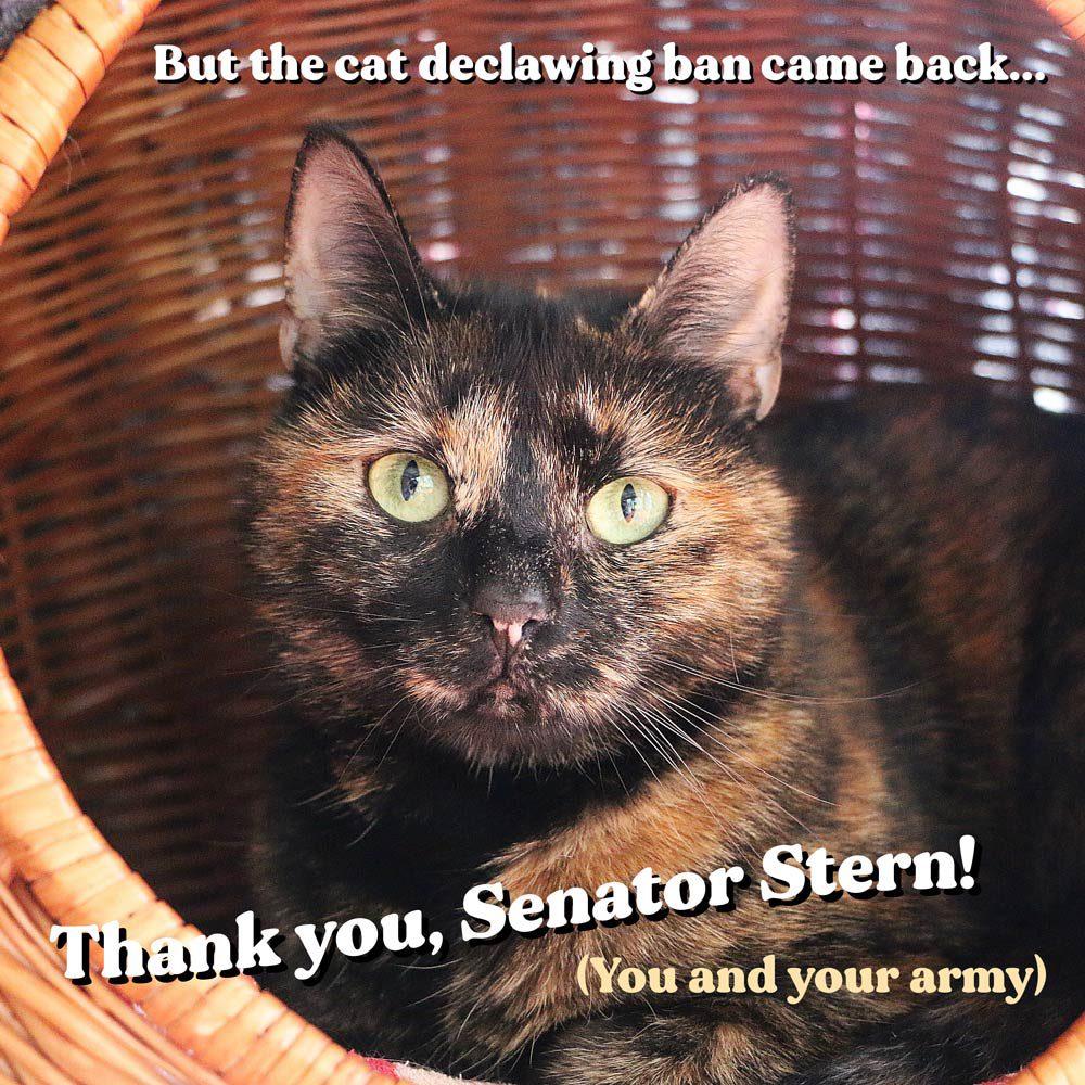 Senator Henry Stern's website