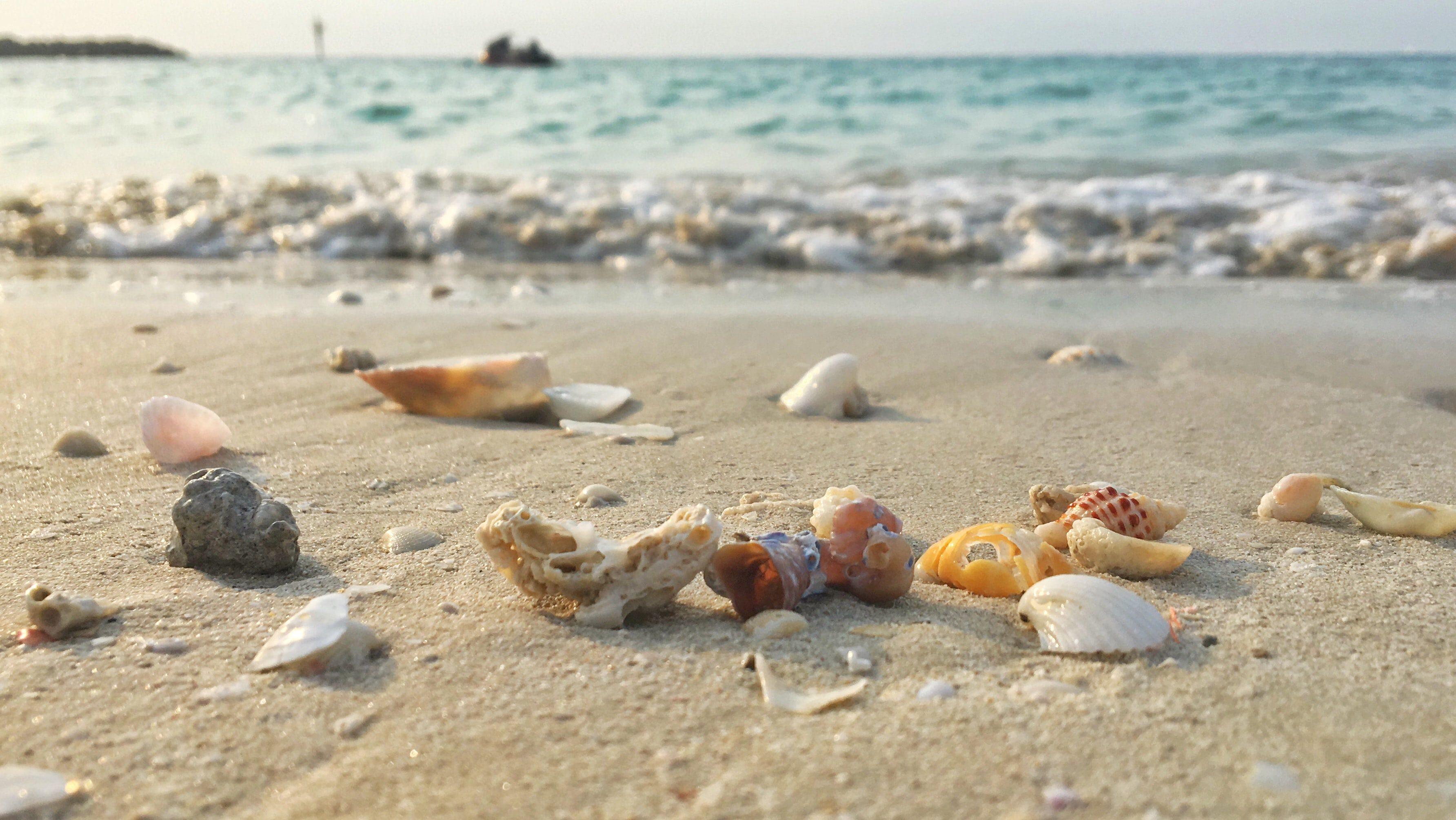 seashells on sand, foamy sea