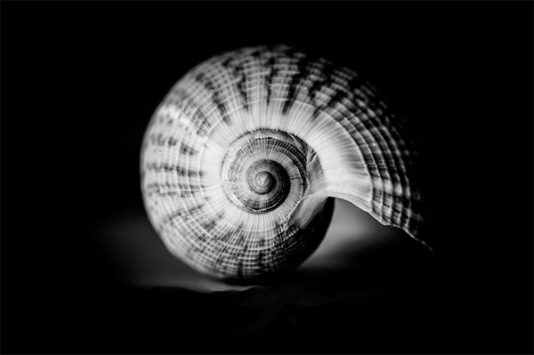 Scott anderson Photography Shell