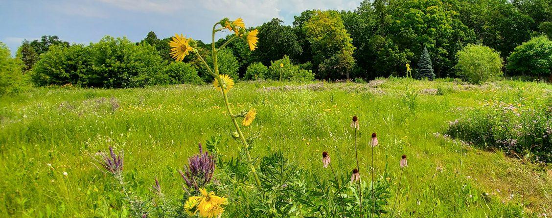 Prairie on CSA land