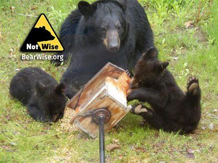 bear cubs raiding bird feeder