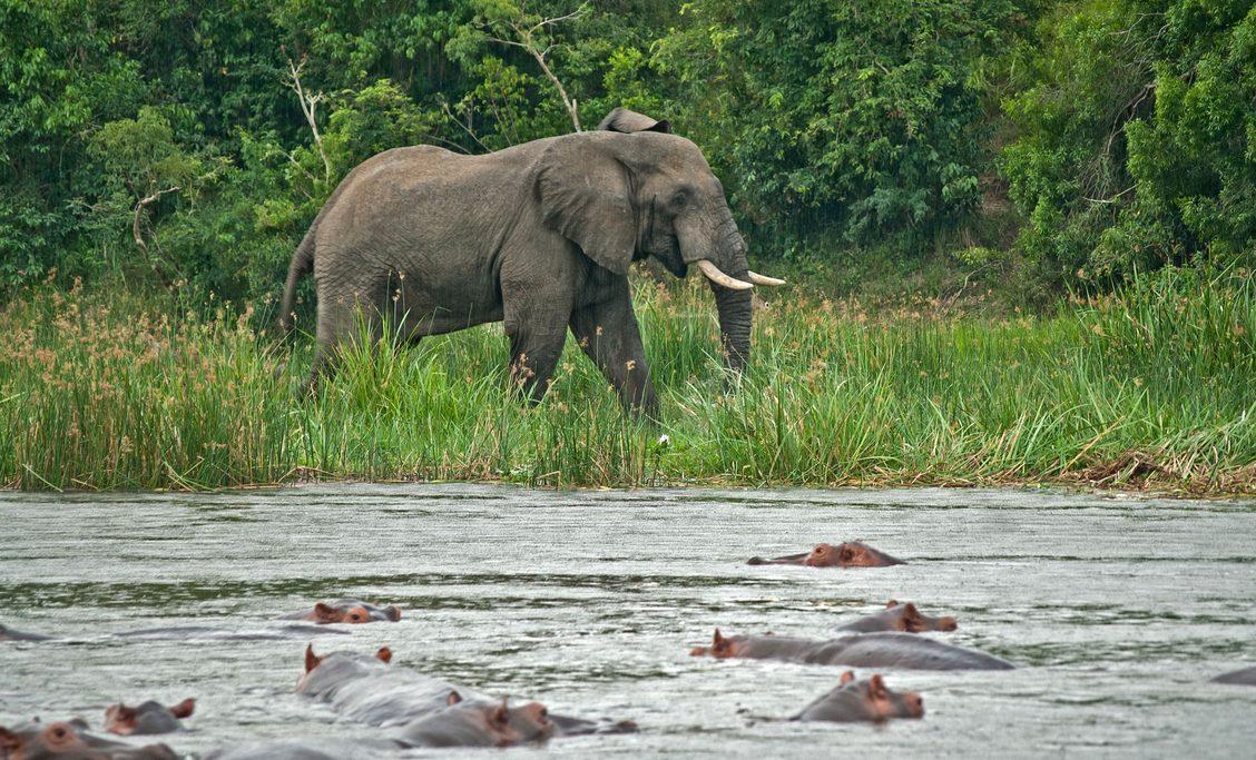 Photo courtesy of Virunga National Park